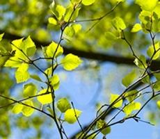 Приднестровье: на этой неделе сохранится теплая погода