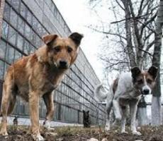 Херсон избавится от бродячих собак