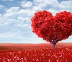 День Святого Валентина объединил западный и восточный мир