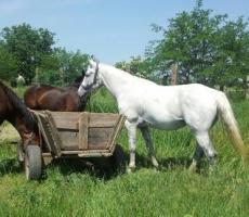 В Тирасполе состоялись конные состязания