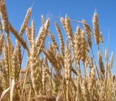 Делегация аграриев Приднестровья посетила Украину
