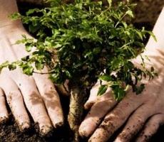 В Приднестровье пройдет массовое озеленение