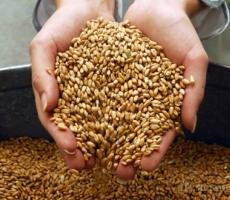 Приднестровье переполнено пшеницей