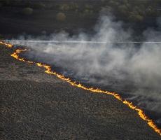 Украинские спасатели ликвидировали лесной пожар в Чернобыльской пуще