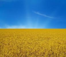 Все больше граждан покидают Украину