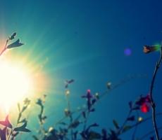 В Молдове и Приднестровье сохранится летняя погода