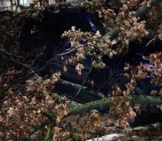 На столицу Приднестровья обрушился сильный ветер