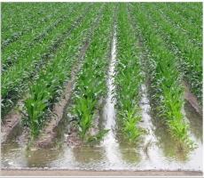 Тамбовская область получит деньги на полив почвы