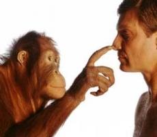 Доктор Чагин: поведение обезьян и людей во многом похоже