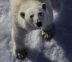 """Уже скоро все животные на планете будут занесены в """"красную книгу"""""""