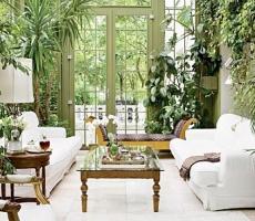 5 растений которые создают благоприятные условия для жизни в доме