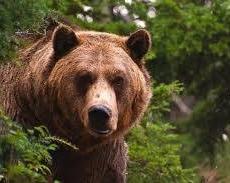 Сегодня день Медведя - это символ колосальной энергии