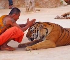 Буддисты против мусульман: истоки конфликта в Мьянме