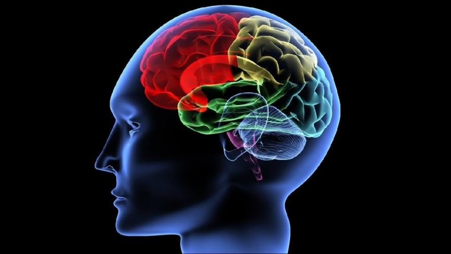 Дмитрий Соин: развитие мозга раскрывает сверхспособности человека